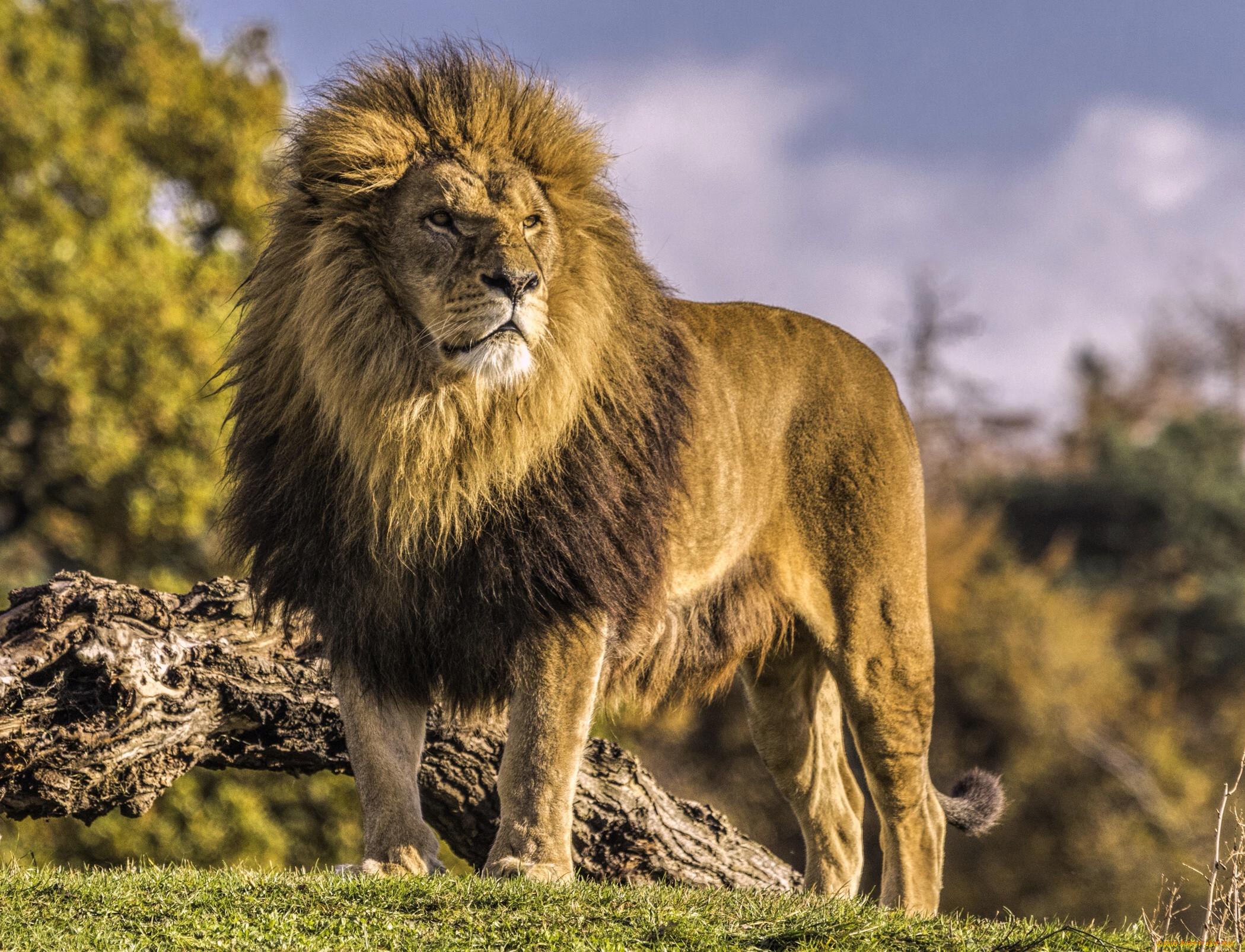 Гордые животные фото